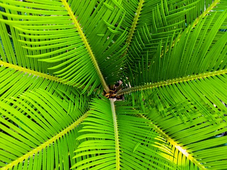 Ian Filippini Botanic Garden